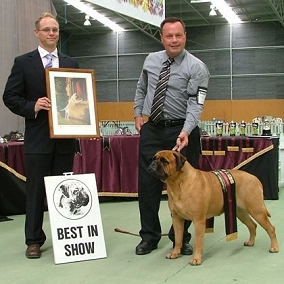 Glenn Sparham awarding Best in Show at the Dominion Bullmastiff Club of New Zealand.