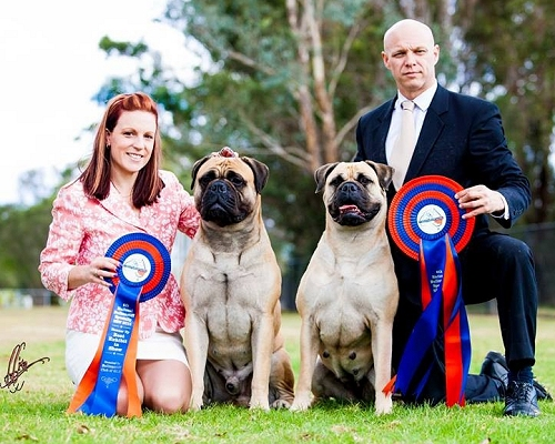 Lilly wins Best in Show at the NSW Bullmastiff National and Kiff wins Runner Up Best in Show!